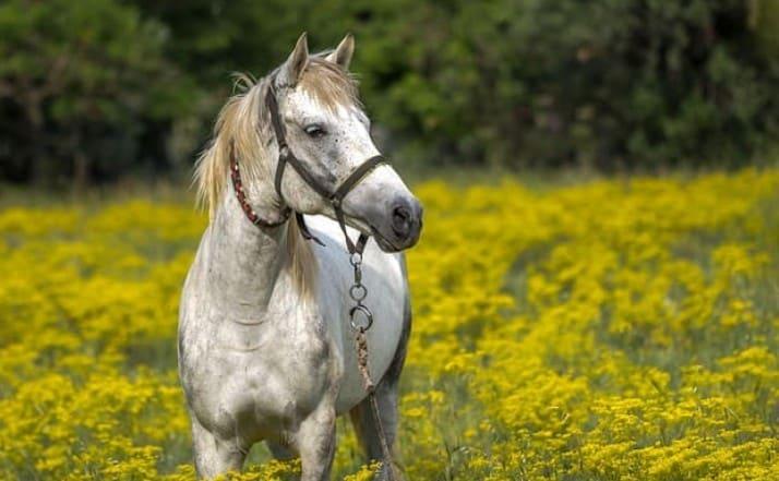 競走馬 寿命