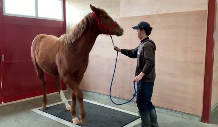 競走馬 体重